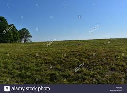 grass field from above. Beautiful Blue Skies Above A Grass Field Lined With Trees In Plymouth, MA. From N