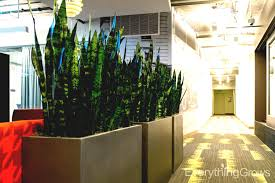 best indoor plants for office. Indoor Plants Unique The Following Photos Are Just A Small Sample Of Interior Incredible Modern Classic Best For Office