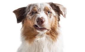 Hills Canine Dental Chart Forms Dentistry Handouts Veterinary Economics