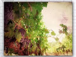 decor vineyard vines framed wine country wall art