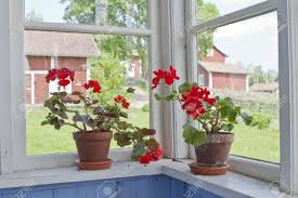 Image result for flowers on the window sill
