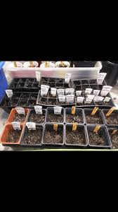 Cyco Feed Chart Growing Cyco Thcfarmer Cannabis Cultivation Network