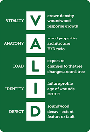 Tree Safety And Risk Assessments Jp Associates