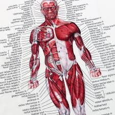 Muscle System Poster Anatomy Chart Human Body Educational Silk Cloth Home Decor