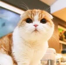 圆圆的猫图片(第1页) - 一起扣扣网