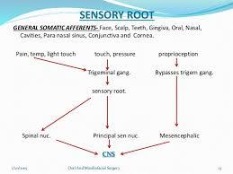 Branches Of Trigeminal Nerve Flow Chart Trigeminal Nerve Anatomy