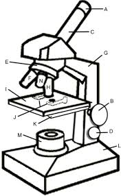 f6498736d2b43c732110dc9a5c8d8205 microscopes microscope parts 107 best images about stem life science on pinterest on double helix coloring worksheet key