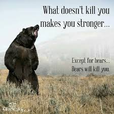 best touching spirit bear images touching spirit  what doesn t kill you makes you stronger except bears bears will kill you this pin and more on touching spirit bear