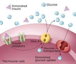 Среднее время доступа Более того в области жирового уплотнения скорость всасывания инсулина уменьшается что усложняет