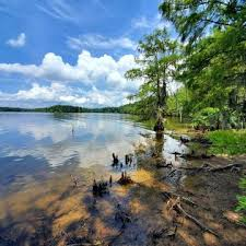 118 lot/land for sale in toledo bend, la. With Waterfront Homes For Sale In Many La Realtor Com