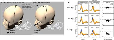 frontiers the video head impulse test neurology frontiersin org