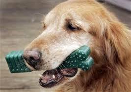 Mars To Buy Greenies Dog Treat Maker Business Us