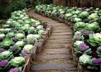 Клумбы с цветами в огород 5