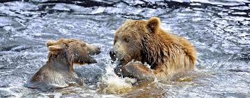 Jul 27, 2021 · zillow has 5,199 homes for sale in alaska. Alaska Und Kanada Seereise 2022 Hurtigruten Expeditions