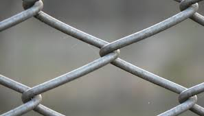 How to Keep a Cat in a Chain Link Fence Animals momme