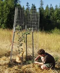 Wireless Deer Fence  Scares Deer From Apple Trees  YouTubeKeep Deer Away From Fruit Trees