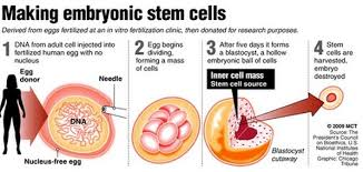 need thesis statement for moby dick office manager executive stem cells essay domov stem cells faqs covers stem cell types including embryonic stem cells uses