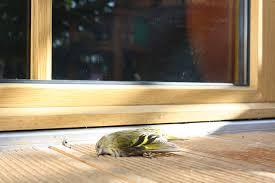 Vogelschutz An Fenstern Glasscheiben Sichern Lbv