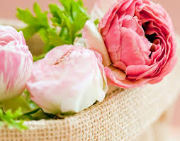 peonies types of summer flowers
