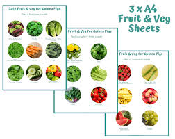 Guinea Lynx Vegetable Chart Guinea Pig Fruit Veg List Chart What Vegetables Can