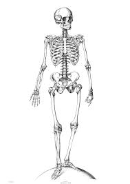 Small Picture Halloween Coloring Pages For Kids Skeleton Hallowen Coloring
