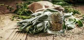 ما هي فوائد عشبة الميرمية؟ - حياتكِ