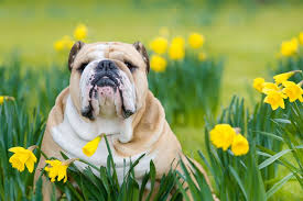 9 Springtime Safety Tips — Wags to Wiskers Pet Supplies | Local Pet Supply Store in Ann Arbor, Chelsea, Ludington MI