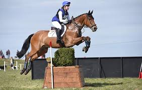 Four-star horse dies after fall during the eventers' grand prix at  Bolesworth