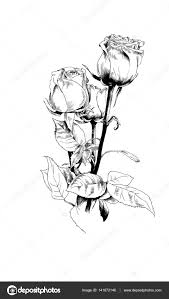 A Bouquet Of Roses Drawn In Ink By Hand Stock Photo Evgo1977