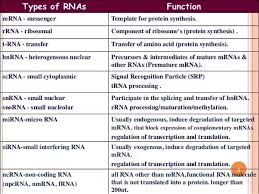 Similarities And Differences Between Mrna And Trna Chart What Are The Differences Between Dna Rna And Mrna Quora