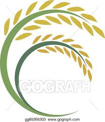 rice plant clipart. Beautiful Clipart Rice Ripe For Harvest Design On White Background With Plant Clipart R