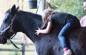 Equine Assisted Therapy | Nj | Top Form Horses
