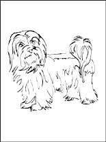 Small Picture Havanese coloring page Coloring pages