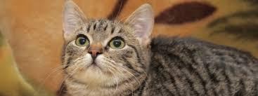 Trauer Um Katze Beileidde