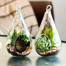 air plant clear hanging glass terrarium whole succulents home canada