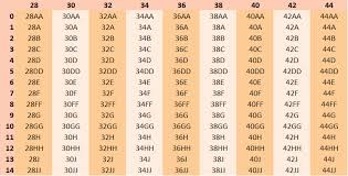 Bra Size Chart Numbers Bra Measuring Guide