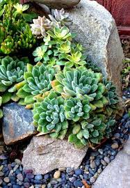 landscaping with rocks rock garden