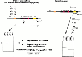 Clonotypic Polymerase Chain Reaction Confirms Minimal Residual