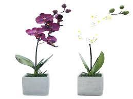 office pot plants. Best Desk Plant Beautiful Office Design Pot Plants Good