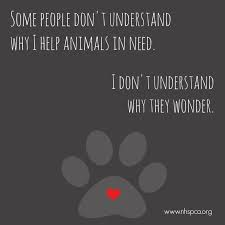 Rescue Dog Quotes Stunning Quotes About Pet Rescue 48 Quotes