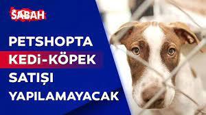 AK Parti, Hayvanları Koruma Kanunu teklifini Meclis'e sundu - YouTube