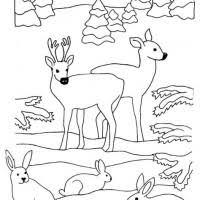 Wildtiere im winter brauchen ruhe und stressfreie rückzugsgebiete. Malvorlagen Waldtiere Im Winter Zum Ausmalen Coloring And Malvorlagan