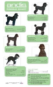 Andis Grooming Chart Pin On Oodles Of Poodles