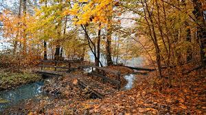 fall nature backgrounds. Fall Nature Backgrounds. Backgrounds U Bgbc.co