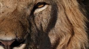 review the lion seeker by kenneth bonert npr