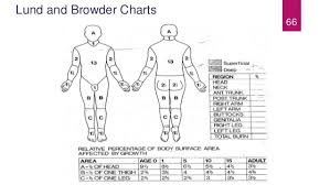 Burns Pathophysiology Evaluation And Management