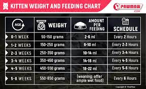 Average Kitten Weight By Age Chart Kitten Feeding Guide How Much Should You Feed Your Kitten