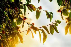 Tree Bearing Fruit  Dust Off The BibleTree Bearing Fruit