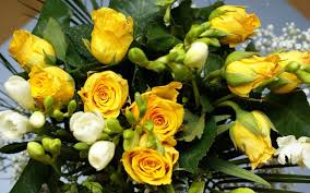 3840x2160 ultra hd wallpaper flower 4k yellow rose flower hd wallpapers