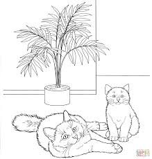 cats for coloring.  Coloring Birman Cat And Cats For Coloring